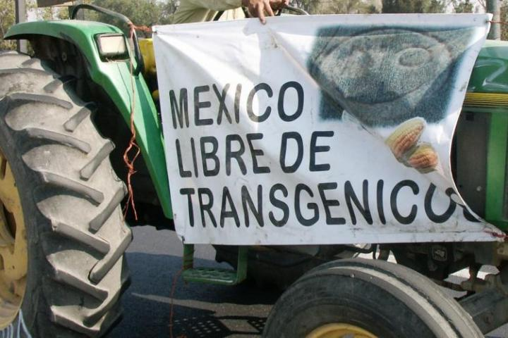 Mexico's Decision to Ban Glyphosate Has Rocked the Agribusiness World