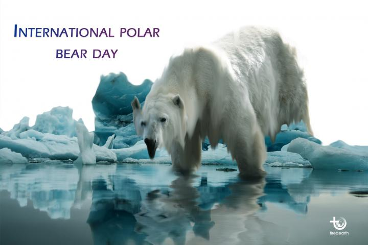 Polar bears are getting thinner and having fewer cubs. Melting sea ice is to blame